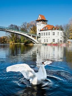 Biały łabędź w treptow park, berlin