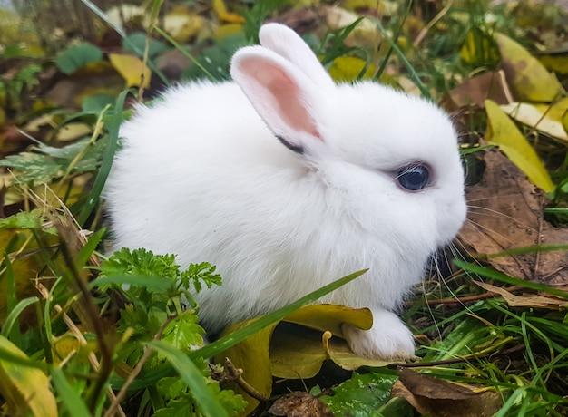 Biały mały królik siedzi na trawie