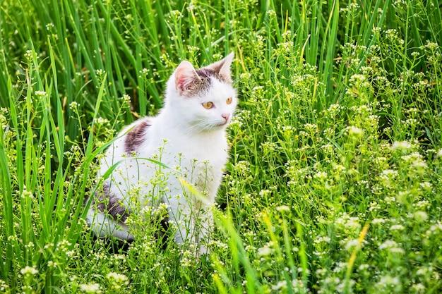 Biały młody kot siedzi w ogrodzie wśród gęstej trawy