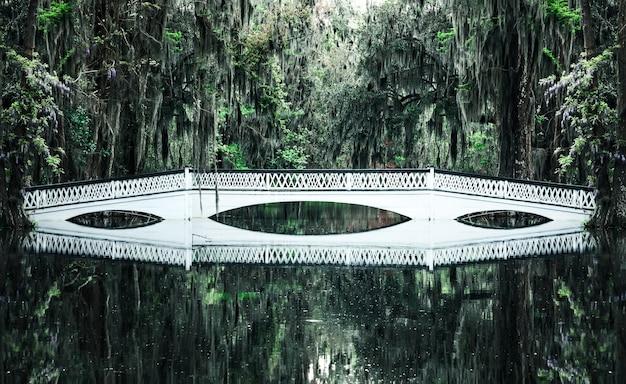Biały most w lesie żywych dębów z hiszpańskim mchem