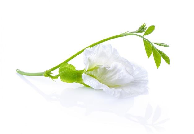 Biały motyl groch na białej ścianie
