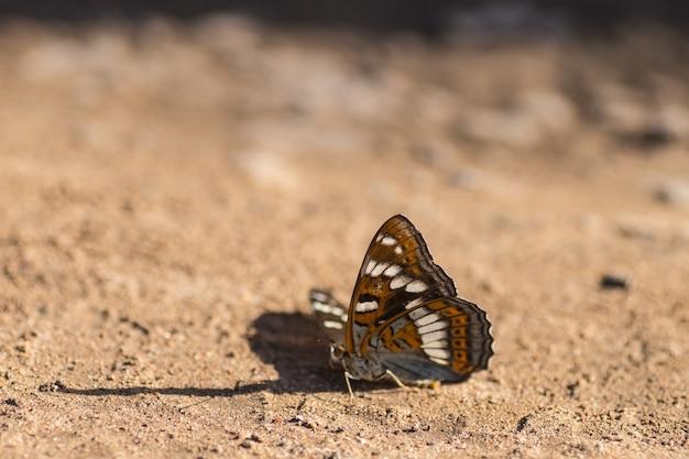 Biały motyl siedzi na piasku. letni dzień
