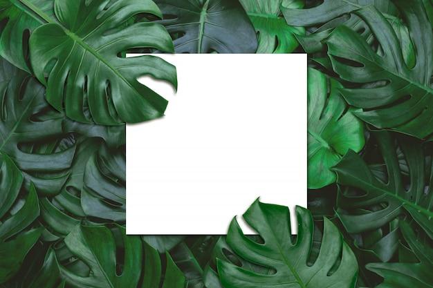 Biały nutowy papier na zielonym liścia tle.