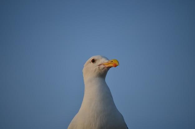 Biały odosobniony seagull na niebieskiego nieba tle
