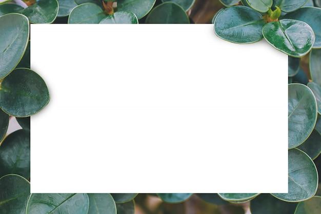 Biały papier na zielonym liść natury tle