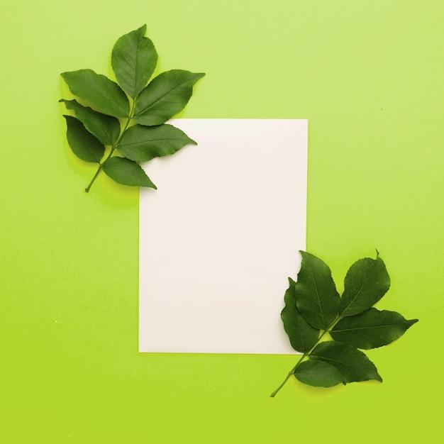 Biały papier z liści gałązką na zielonym tle
