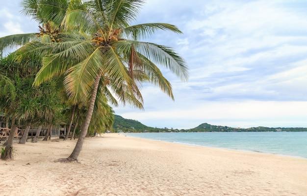 Biały piasek na plaży lamai, koh samui, tajlandia. po tym, jak covid nie miał turystów, sprawili, że morze całkowicie odnowiło się ekologicznie, równowaga natury