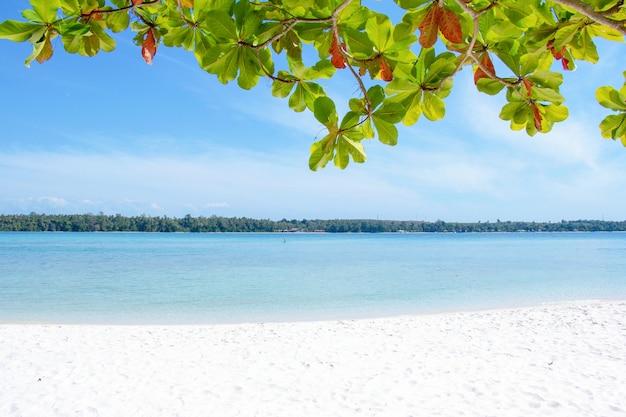 Biały piasek z błękitnym morzem na lato koncepcji
