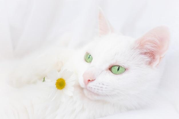 Biały, piękny kot o zielonych oczach leży na białym prześcieradle.