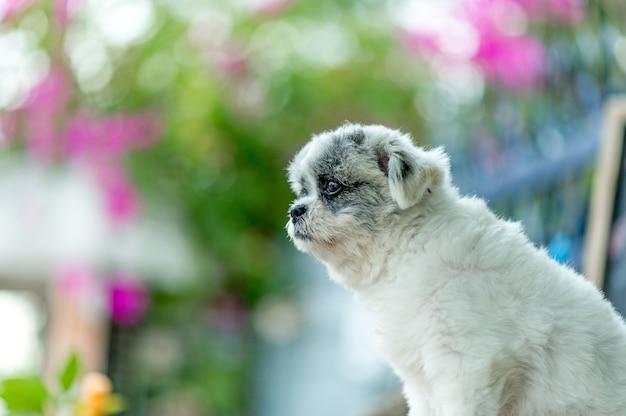 Biały pies obraz, uroczy sesja zdjęciowa, koncepcja pies miłości