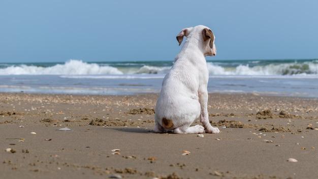 Biały pies siedzi na plaży otoczonej morzem w słońcu - pojęcie samotności