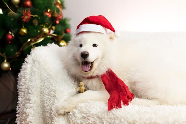 Biały pies w czerwonym szaliku i kapeluszu.