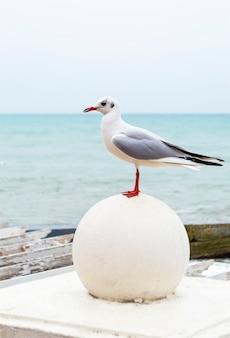 Biały ptak mewa stojący na kamieniu po przeciwnej stronie morza