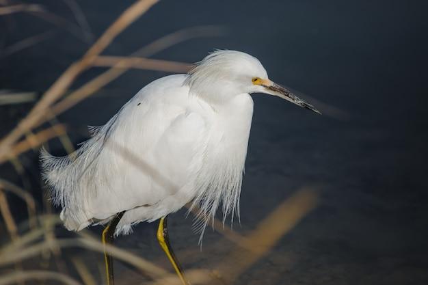Biały ptak na brązowym drewnianym patyku