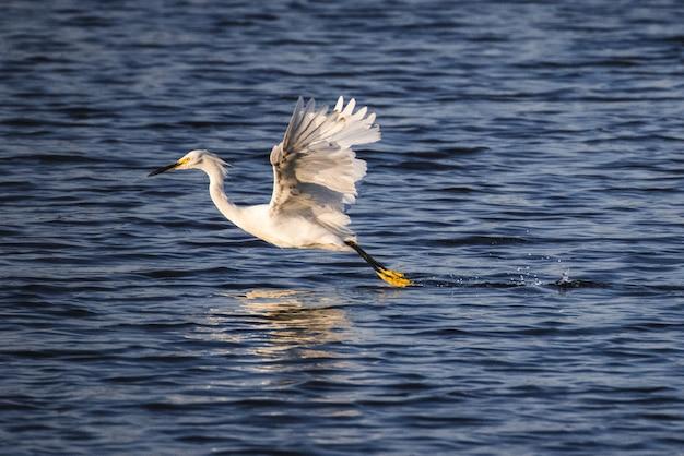 Biały ptak na wodzie w ciągu dnia