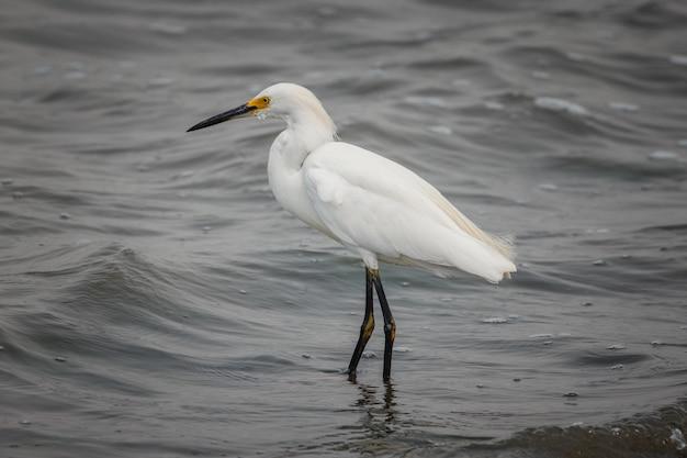 Biały ptak na zbiorniku wodnym w ciągu dnia