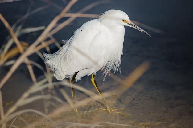 Biały ptak na zbiorniku wodnym