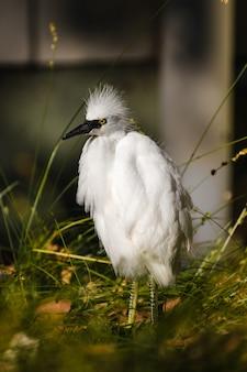 Biały ptak na zielonej trawie