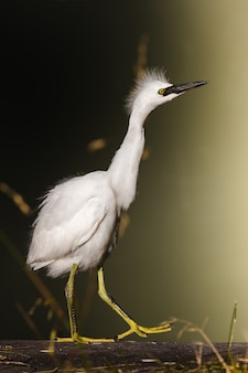 Biały ptaszek na żółtej metalowej podstawce