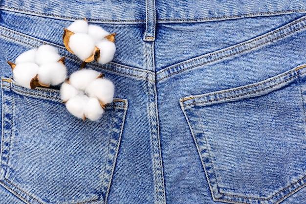 Biały puszysty kwiat bawełny w kieszeni niebieskich dżinsów