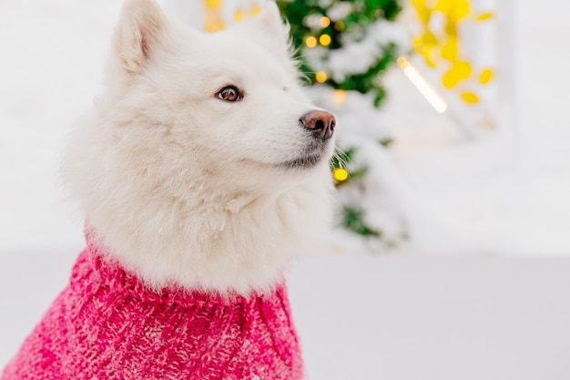 Biały rodowód psa obsiadanie na śniegu w lesie. śmieszne zwierzęta