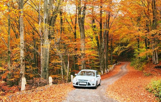Biały samochód na leśnym szlaku.