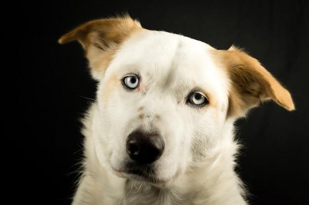 Biały słodki pies ulica z czarnym tłem