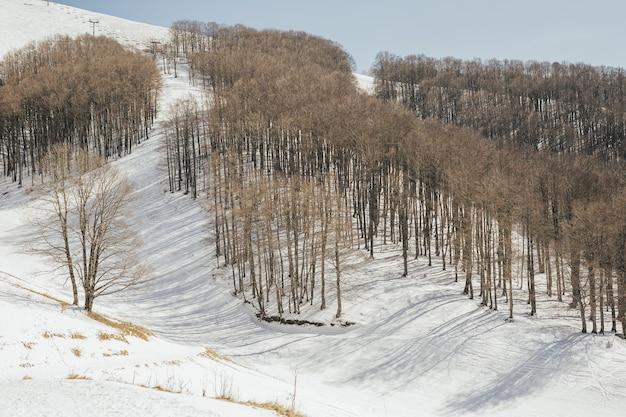 Biały śnieg i drzewa leśne w mroźną zimę. jasny, słoneczny dzień, czyste, błękitne niebo.
