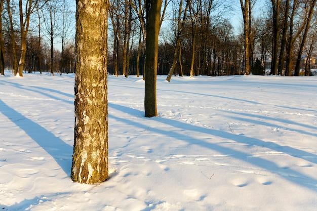 Biały śnieg leżący na ziemi w zimie