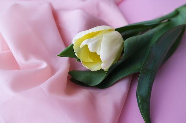 Biały tulipan na delikatnym różowym tle