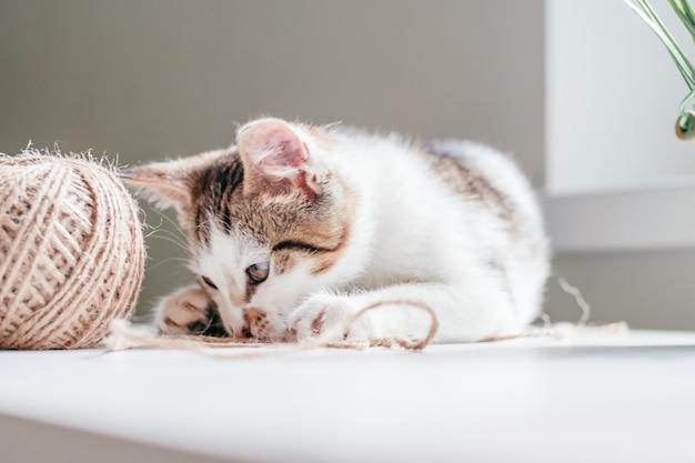 Biały w szare prążki kot 3-4 miesiące bawi się motkiem liny jutowej obok kuli. zabawny kociak nierasowy
