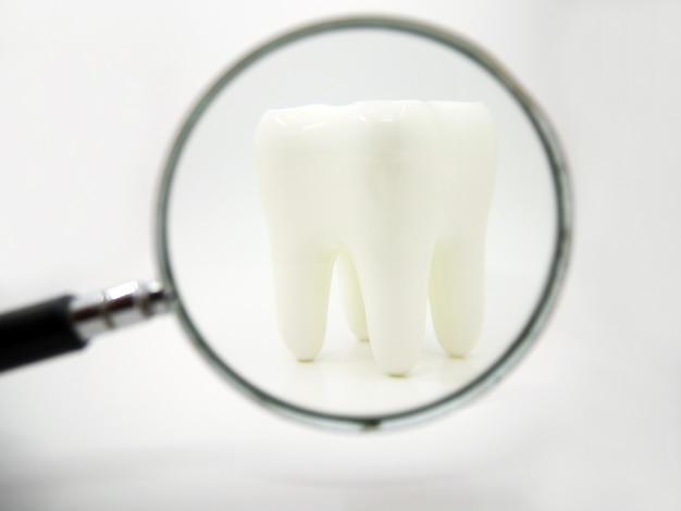 Biały zdrowy ludzki ząb na białym tle z lupą