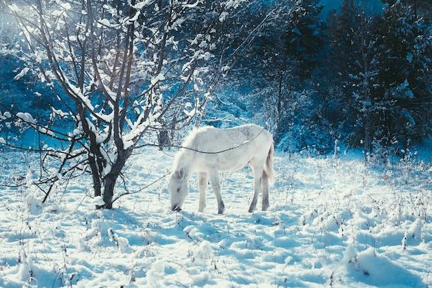 Biały źrebak na tle bajkowego zimowego krajobrazu wigilia,
