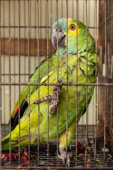 Biedna zielono-żółta ara w klatce.