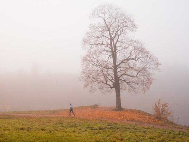 Biegacz w mglistym parku jesienią. rano mistyczny krajobraz z drzewem w parku