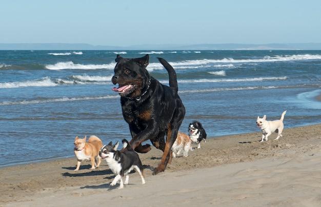 Biegające psy