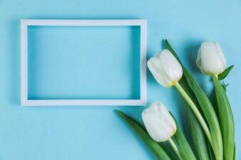 Biel pusta rama z świeżymi tulipanami przeciw błękitnemu tłu