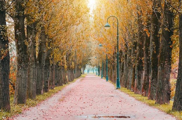 Big topola jesienią w parku - jasny jesienny krajobraz parku.