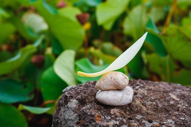 Bilans kamienia i lotosu płatek na skale stawu