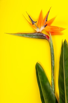 Bird of paradise flower strelitzia reginae