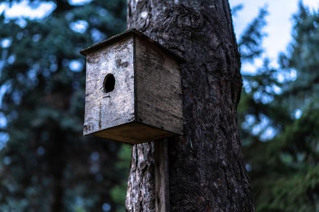 Birdhouse dla ptaków zamontowanych na drzewie