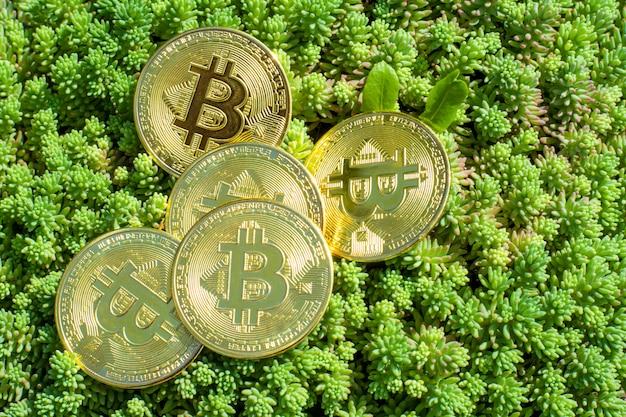 Bitcoiny z bliska na roślinach