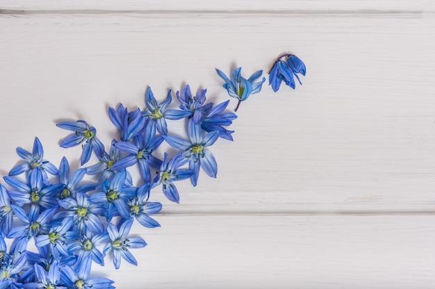 Błękitna cebulica kwitnie na białym drewnianym stole