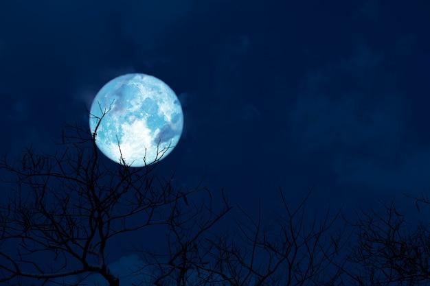 Błękitna księżyc z powrotem sylwetki miękkiej chmury sucha branck drzewo na nocnym niebie