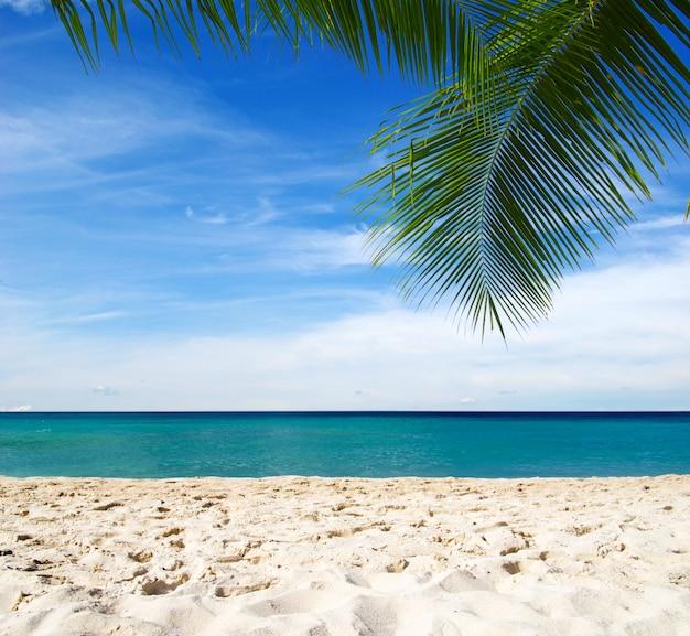 Błękitna plaża nad morzem karaibskim