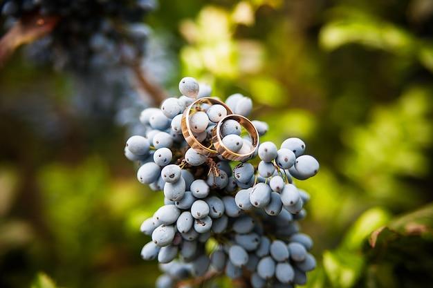 Błękitna wiązka winogrona i obrączki ślubne