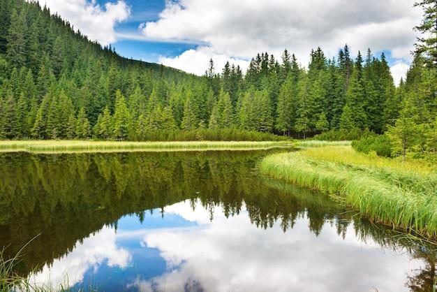 Błękitna woda w leśnym jeziorze z sosnami