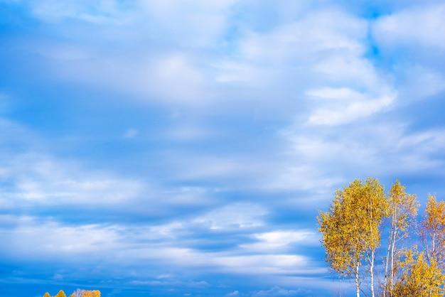 Błękitne niebo i drzewo z jesiennymi liśćmi.
