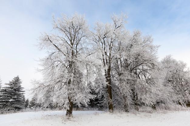 Błękitne niebo i nagie drzewa liściaste zimą, krajobraz