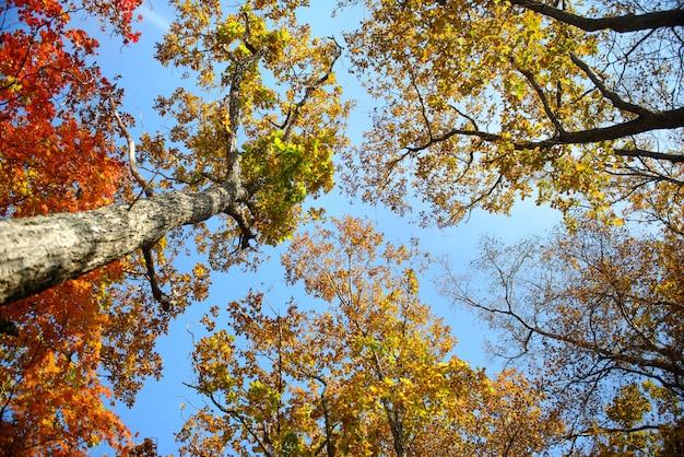 Błękitne niebo przez jesienne liście w tle